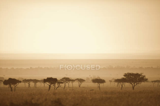 Alberi nella savana al tramonto — Foto stock