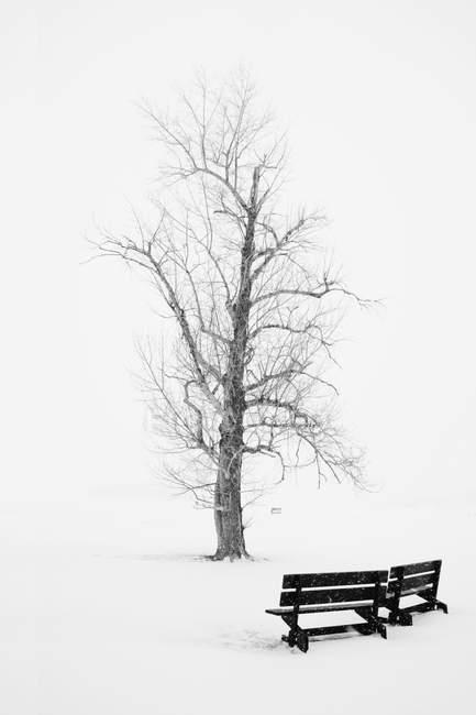 Дерево в зимнем парке — стоковое фото