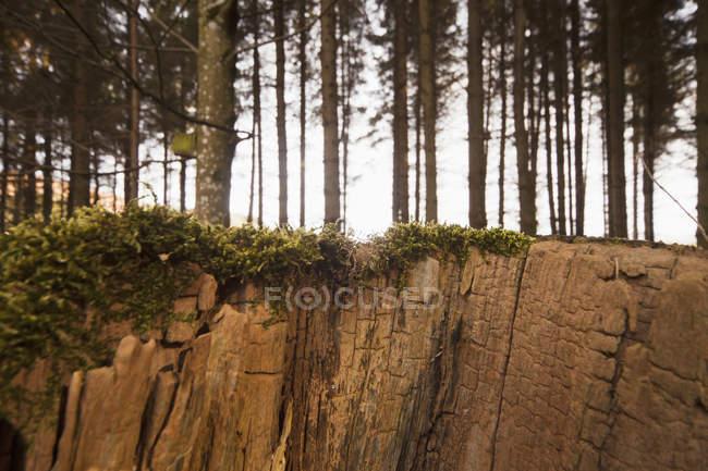Тріщини скелі вздовж краю лісу — стокове фото