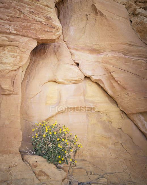Рок поверхні з польових квітів — стокове фото