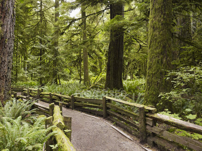 Cathedral Grove, Canada — Foto stock