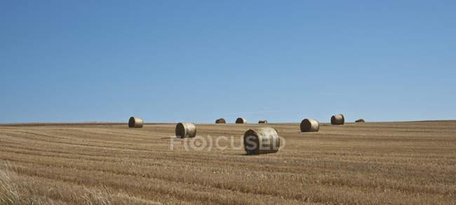 Balle di fieno in un campo — Foto stock