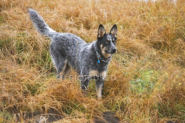Cane di razza mista — Foto stock