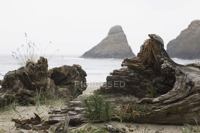 Bois flotté sur la plage, Oregon — Photo de stock