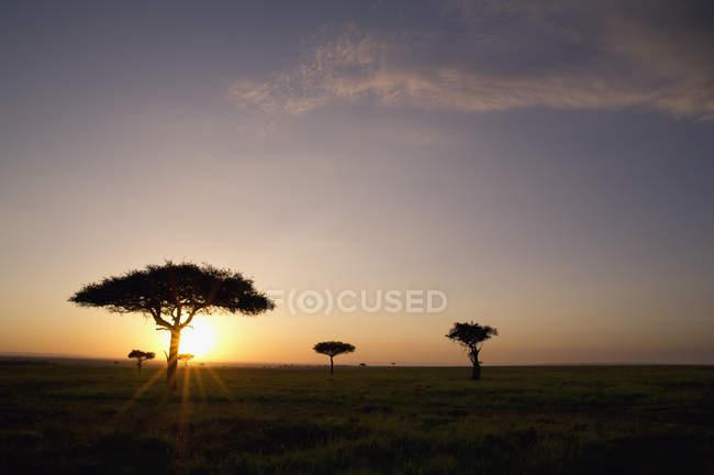 Arbres Sur Savane Avec Soleil Brillant Au Coucher Du Soleil — Photo de stock