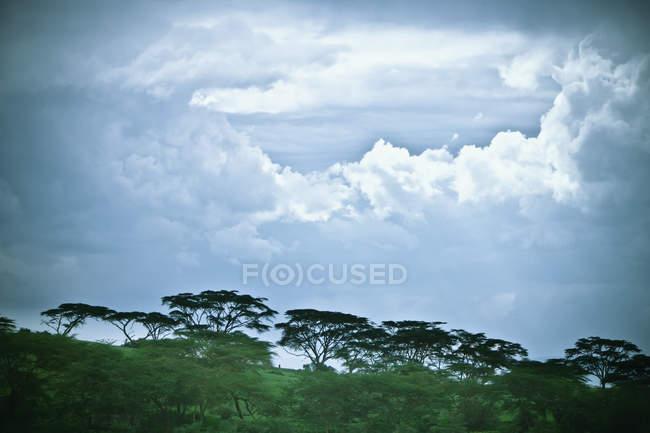 Bäume unter bewölktem Himmel — Stockfoto