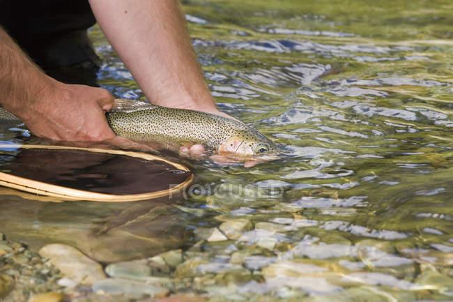 Man hands holding fish — Stock Photo