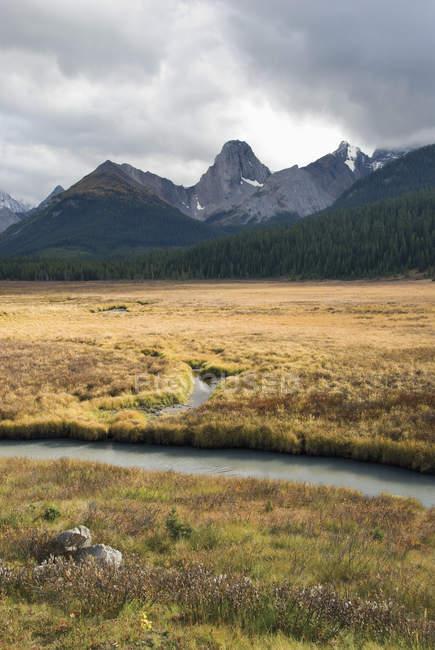 Engadin-Wiese im Kananaskis Provincial Park — Stockfoto