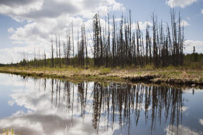 Um rio tranquilo com um reflexo das árvores e nuvens — Fotografia de Stock