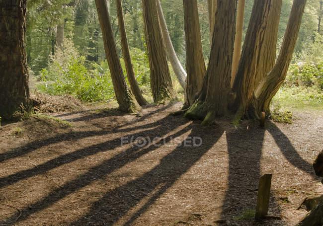 Trees In Woodstock Gardens — Stock Photo