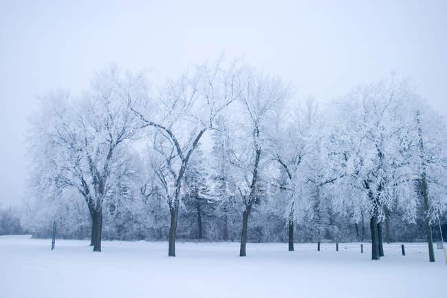 Парк с деревьями зимой — стоковое фото