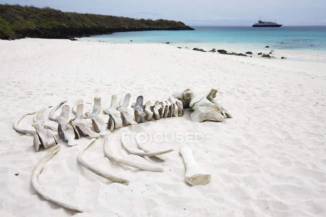 Белый песчаный пляж с бирюзовой водой — стоковое фото