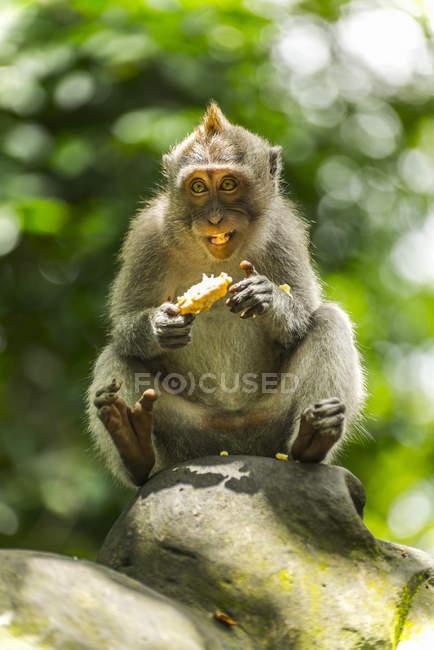 Scene in Monkey Forest — Stock Photo