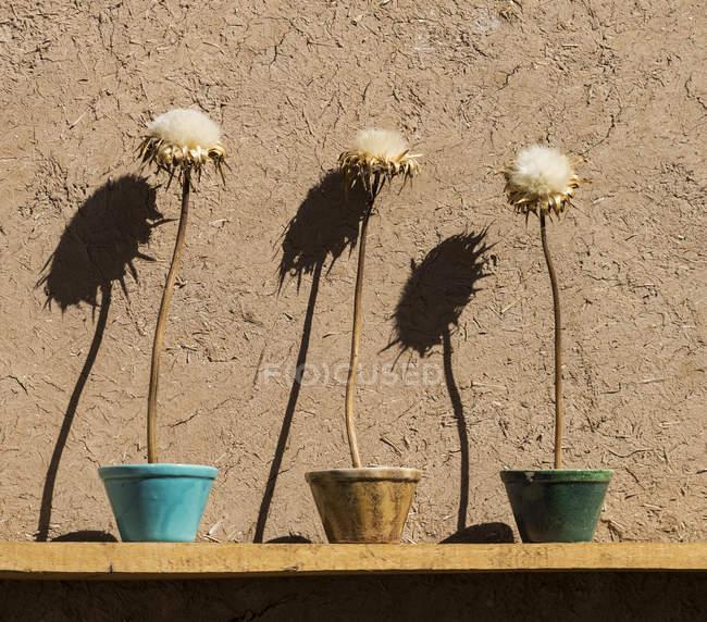 Getrocknete Blumen in einem Hof; yazd, iran — Stockfoto