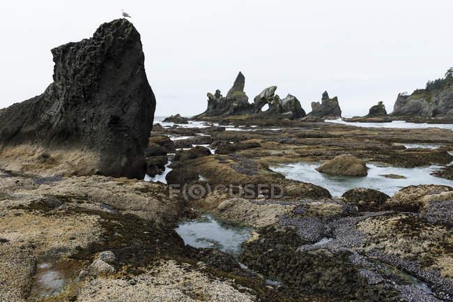 Shi Shi Beach — Stock Photo