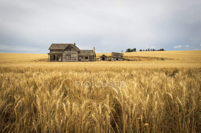 Wooden farmstead in wheat field — Stock Photo