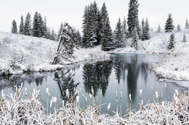 Open pond in winter — Stock Photo