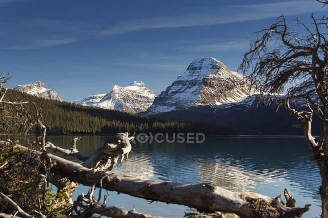 Lac de montagne encadré de bois flotté — Photo de stock