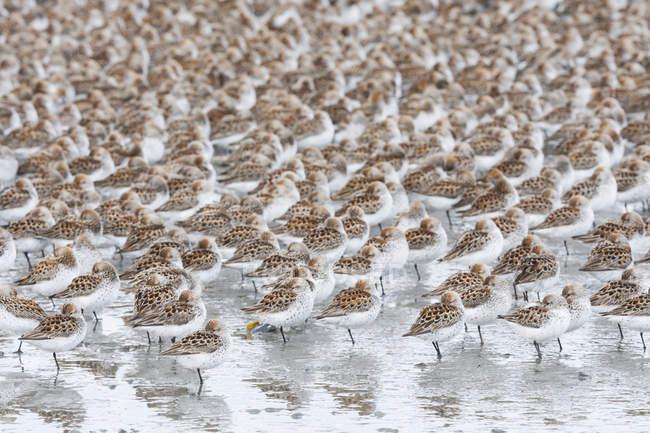 Stormo di piccoli uccelli — Foto stock