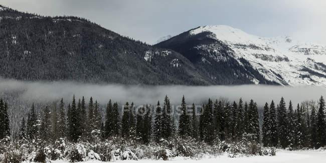 Туман оселилися над ліс — стокове фото
