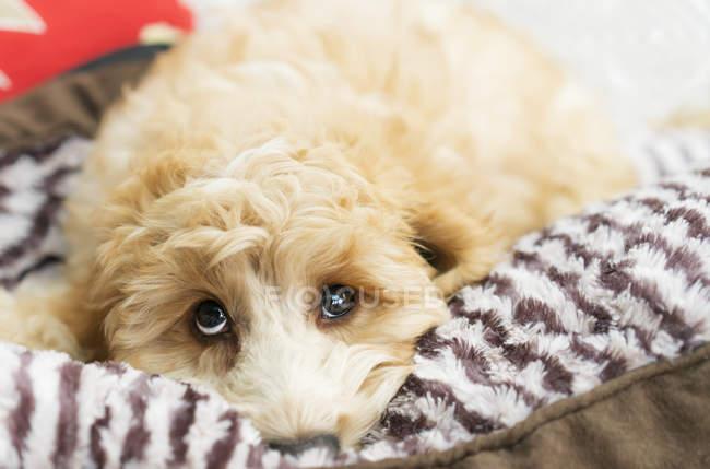 Carino cane posa a letto — Foto stock