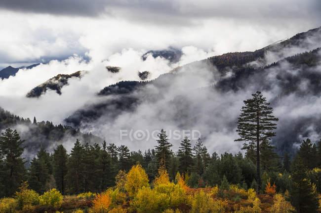 Nubes en los valles boscosos - foto de stock
