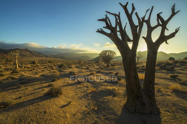 Richtersveld National Park — Stock Photo