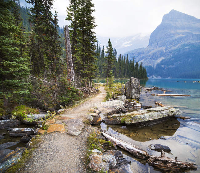 Trail with trees against calm lake water — Stock Photo