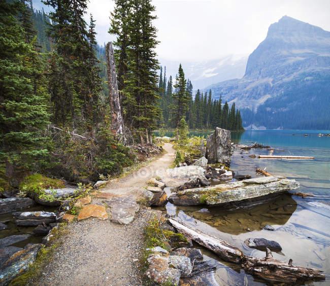 Trilha com árvores contra a água do lago calmo — Fotografia de Stock