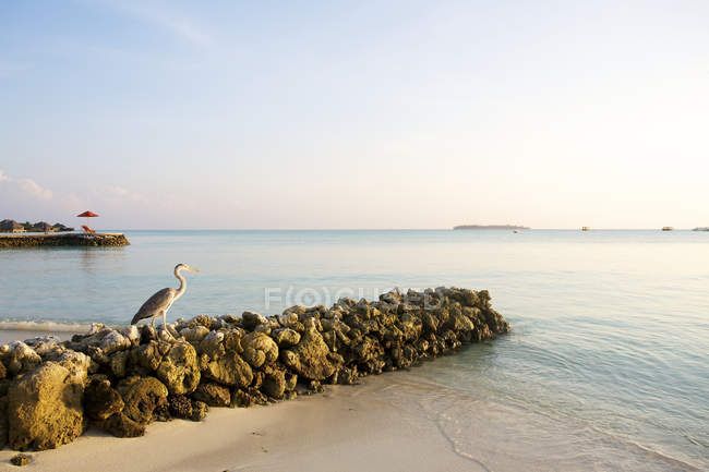 White sand beach with perched heron — Stock Photo
