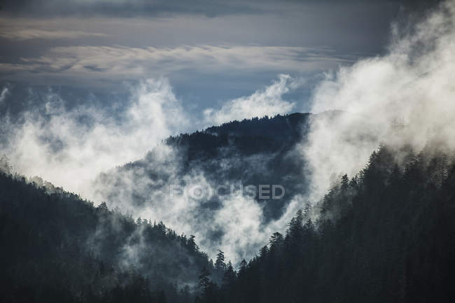 Vista del bosque de exuberante - foto de stock