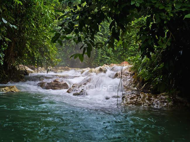 Waterfall and trees near Kimbe — Stock Photo