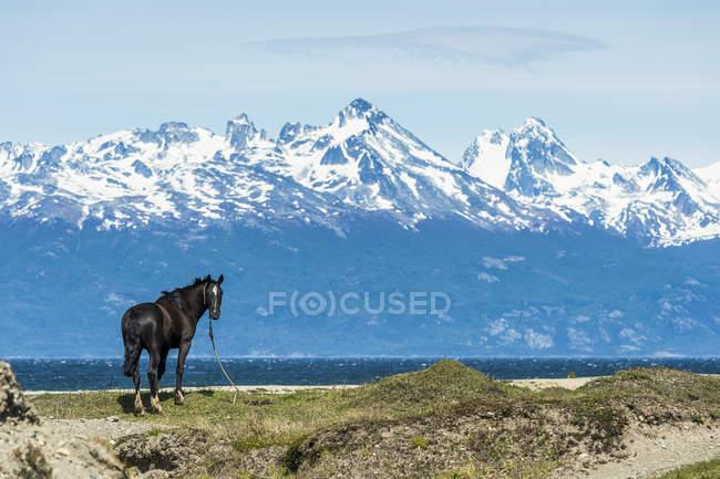 Лошади на берегу и горы — стоковое фото