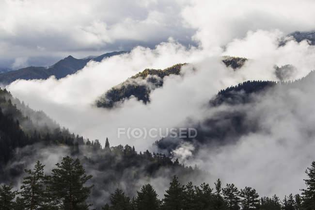 Nuages dans les vallées boisées — Photo de stock