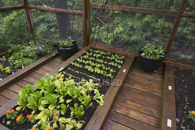 Herbs growing in boxed gardens — Stock Photo