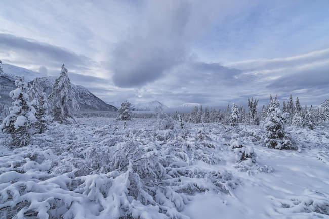 Wolken und Nebel umhüllen die Berge — Stockfoto