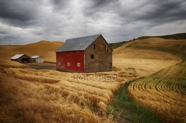 Campi di grano dorato — Foto stock
