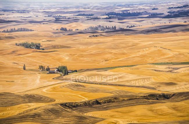 Campos de trigo sem fim — Fotografia de Stock