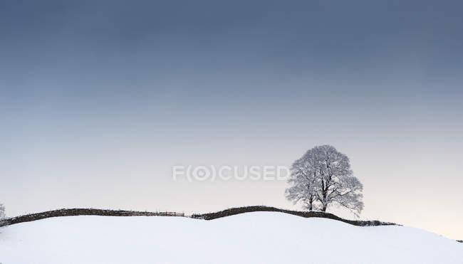 Árbol aislado en la nieve - foto de stock