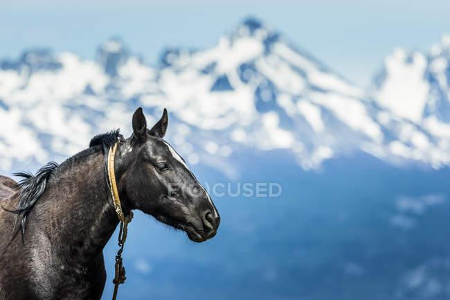 Cheval sur terre et montagnes — Photo de stock