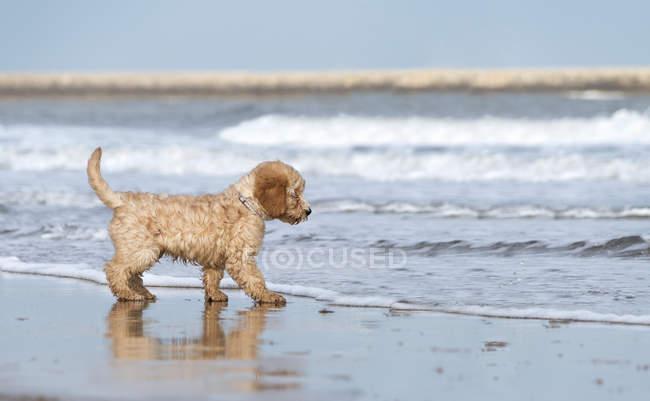 Cão fica na praia — Fotografia de Stock