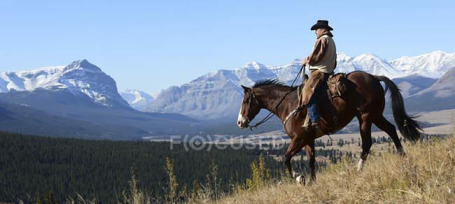 Cavallo di equitazione del cowboy — Foto stock