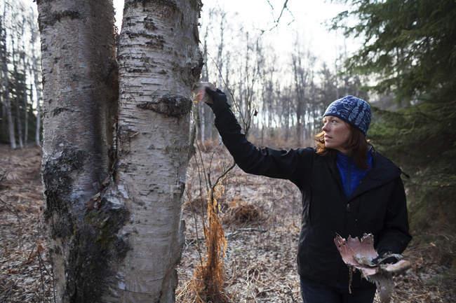 Eine Frau schält Rinde einer Birke im Wald — Stockfoto