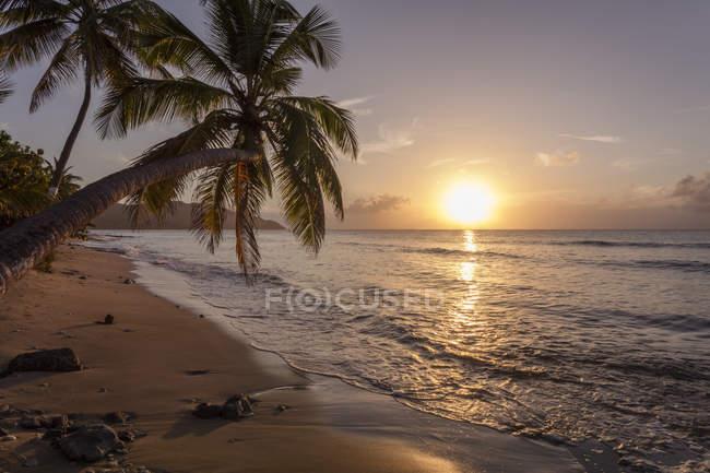 Силует пальми на заході сонця. — стокове фото
