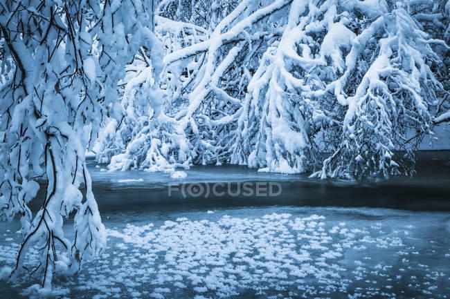 Frozen Thunderbird Creek — Stock Photo