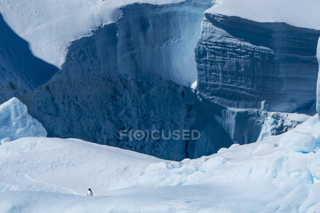 Frozen ice cliffs with penguin — Stock Photo