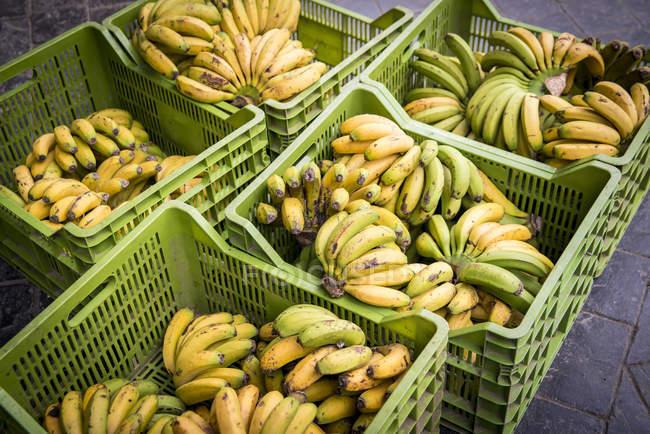 Boxes of bananas at Mercado da Graca — Stock Photo