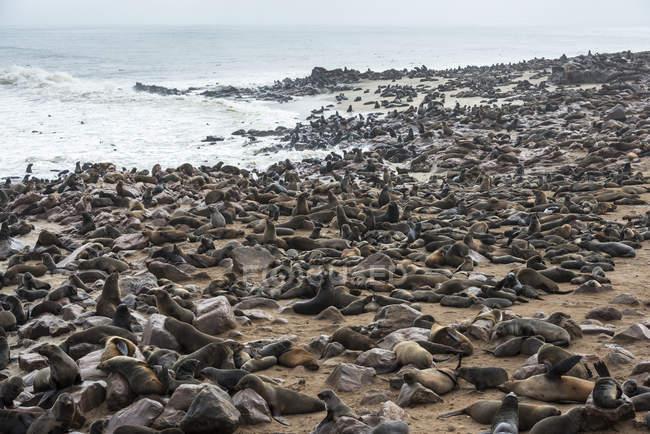 Una de las colonias más grandes - foto de stock