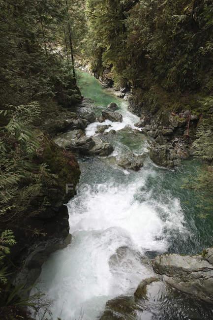 Puente colgante de cañón de Lynne - foto de stock
