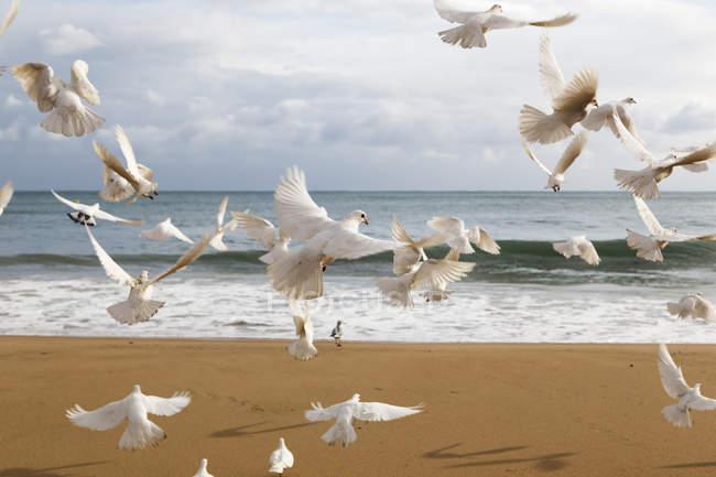 Schwarm weißer Vögel flüchtet — Stockfoto